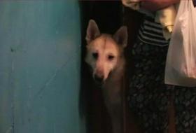 Приют для животных в квартире организовала пенсионерка в Красноярске: соседи жалуются на запах экскрементов